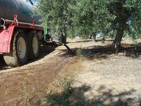 Management of liquid waste from oil mills through its application in olive groves