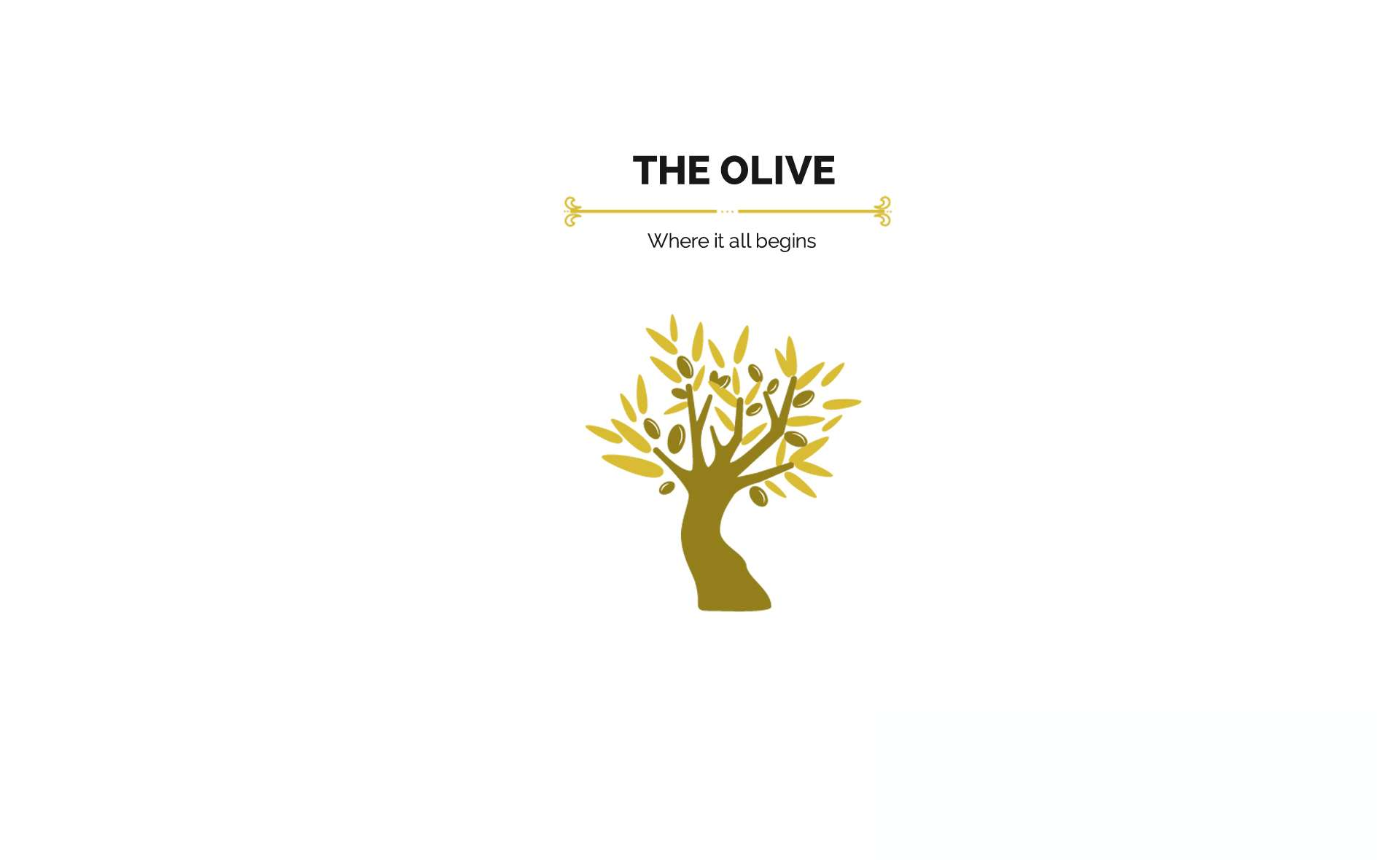 olive oil comes from the olive tree