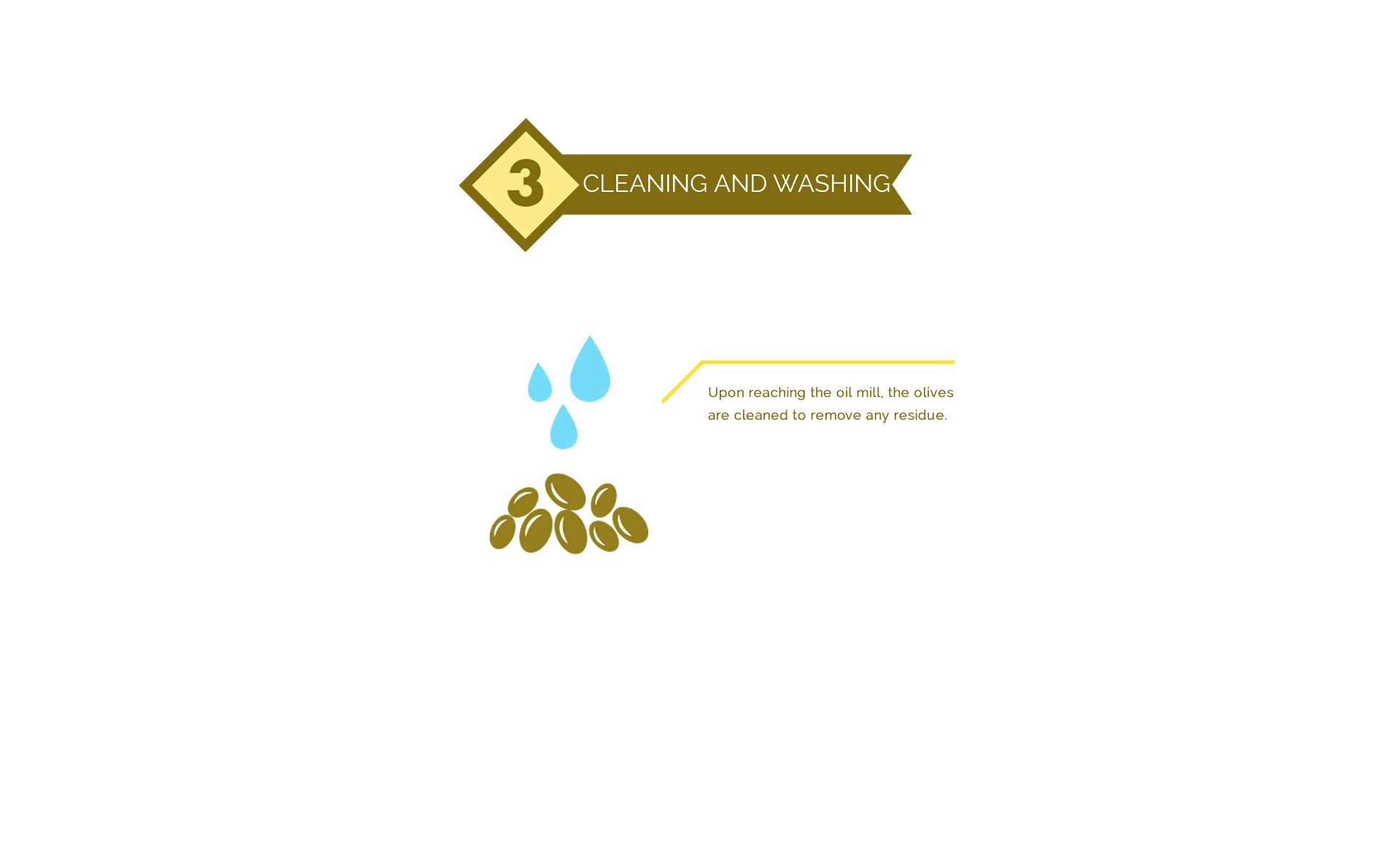 olive oil Cleaning process