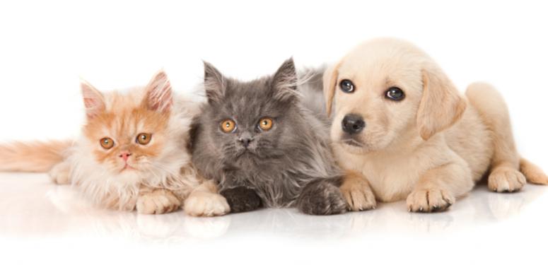 宠物护理中使用橄榄油